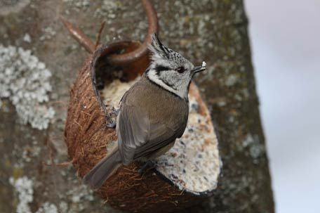 Startschuss zum Vogelfüttern | Birdlife Österreich